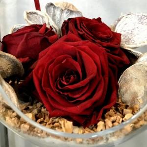Rožės Klaipėdoje